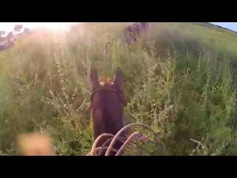 Caçada de Bufalo Nova Crixas GO Parte 2