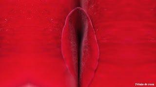 Datos curiosos del clitoris