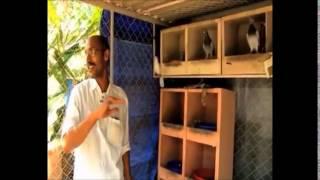Documentary on Fancy Pigeon Rearing in Kerala