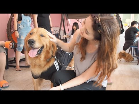 Paws & Tails Dog Cafe in Gading Serpong (Indonesia)