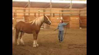 Teaching a Horse to Lunge for the First Time with Gentle Horse Trainer Missy Wryn