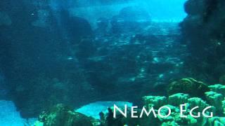 Finding Nemo Theme: Nemo Egg - Thomas Newman - Michael J. Linn