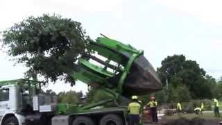 Máquina de plantar, remover e replantar árvores. Solução para Salvador e outros Centros