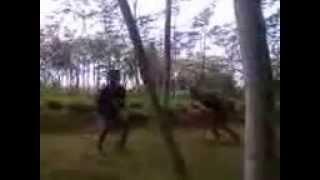 Pertarungan vampir vs serigala