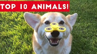 Top Ten Funny/Cute Pet Videos of August Part 1