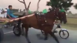 King of Pakistan Charsi Wachera Horse Race Try 22/05/2017