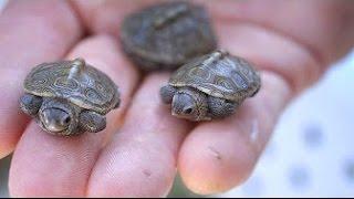 12 Most UNUSUAL Turtles