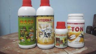cara budidaya ikan nila,vitamin penggemuk ikan nila,nutrisi ikan nila,tambak ikan nila
