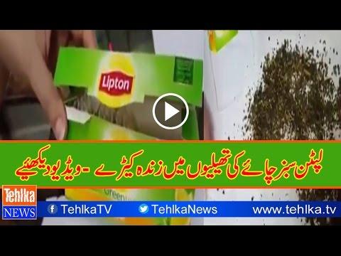 Lipton green tea bag contain live worms