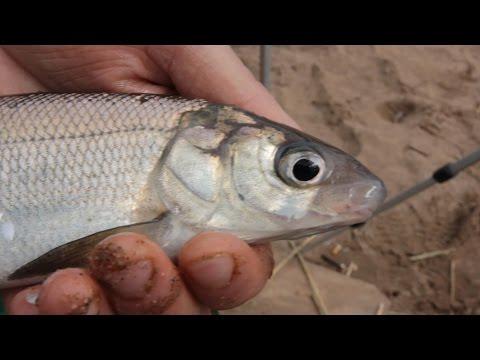 рыбалка на неве на фидер