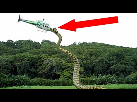 Xxx Mp4 अमेजन जंगल के 5 सबसे खतरनाक जानवर 5 Deadliest Creatures Of The Amazon YOU WONT BELIEVE EXIST 3gp Sex