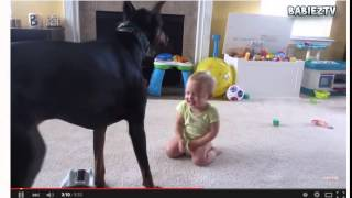 Dogs playing with babies funny compilation videos | Funny dogs video | Babies funny videos
