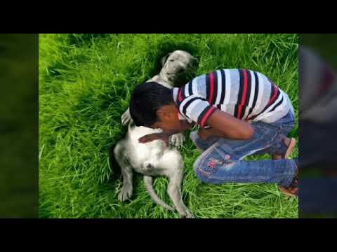 Xxx Mp4 কুকুরের দুধ খেয়ে জীবন বাঁচালো বাচ্চাটি Kukurer Dudh Kheye Jibon Bachalo Baccati Bujlam Na 3gp Sex