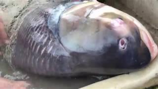 Unbelievable Fisherman vs. River Monsters Underwater Battle!