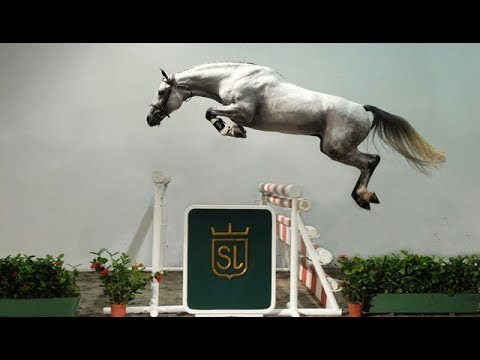 Funny And Cute horse horse jump fence #08