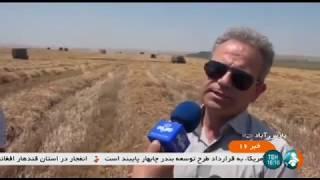 Iran Mechanized Autumn Wheat harvest, Pars-Abad county برداشت گندم پاييزه پارس آباد ايران