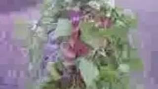 Dj জোগল দিয়ে সাজা নো মানুষ কেমন লাগ না্ দেখল মিছ