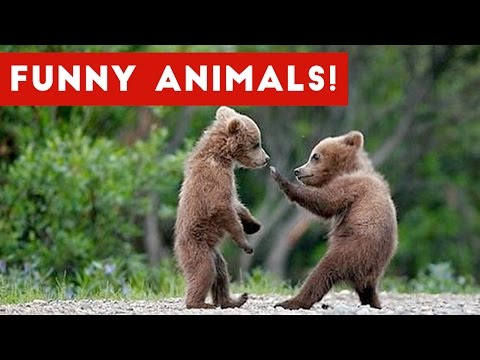 Funniest Animal Clips Moments & Bloopers of November 2016 Weekly Compilation Funny Pet Videos