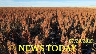 Over Sorghum Salad, U.S. Farmers And Chinese Buyers Chew On Trade | News Today | 07/21/2018 | D...