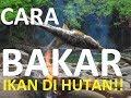 Download Video cara membakar ikan saat Camping di Hutan 3GP MP4 FLV