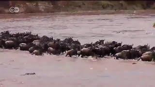 Maajabu ya mbuga ya wanyama ya Serengeti