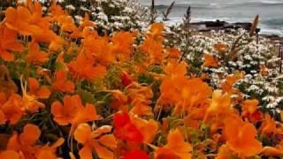 Ernesto Cortazar - Morelia's Waltz