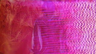 John Maus - The Combine (Official Video)