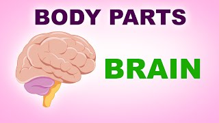 Brain - Human Body Parts -  Pre School Know Your Body - Animated Videos For Kids