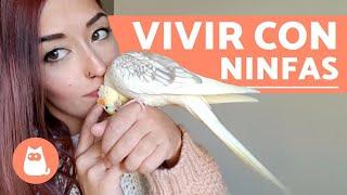 Cuidados de una Ninfa 🐦LITTLE BIRDS