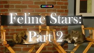 How to make your Cat a Star! pt 2