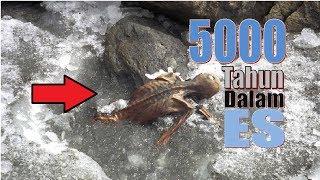 inilah Jasad Manusia yang Terperangkan dalam Es Selama 5000 tahun!