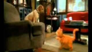 CAT AND DOGK ( (1).3gp bangla funny vedio................