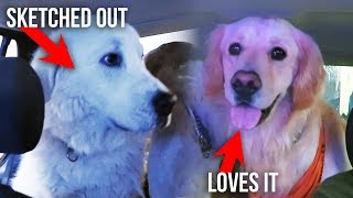 DOGS REACT TO DRIVE THRU CAR WASH