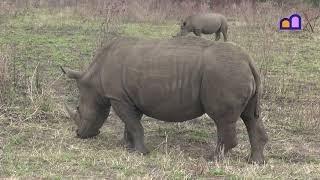 South Africa - Hluhluwe Imfolozi National Park