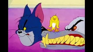 Tom And Jerry English Episodes - Kitty Foiled - Cartoons for kids