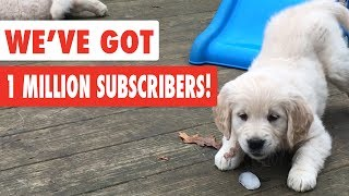 The Pet Collective Celebrates 1 Million Subscribers! | Funny Pet Video Compilation 2017
