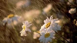 RHTDM- love is in the rain.wmv