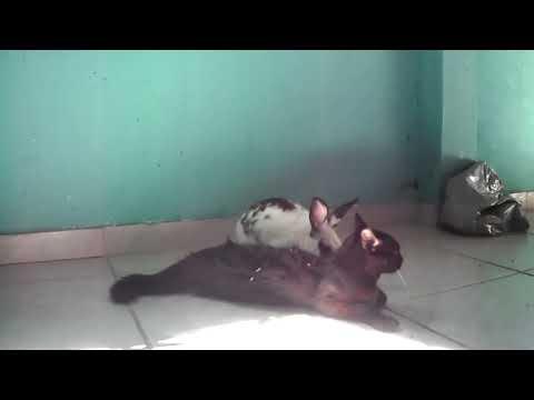 O coelho e o Gato
