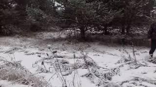 осмотр земель сельскохозяйственного  назначения вблизи деревни  Стрельчиха ноябрь 2017 г.