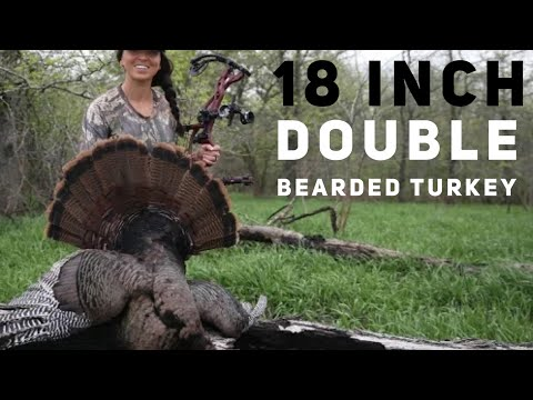 Xxx Mp4 Sarah Shoots 18 Inch Double Bearded Turkey With A Bow 😳 Bowmar Bowhunting 3gp Sex