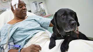 10 animals that saved lives