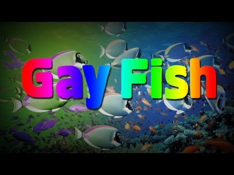 Female Fish Turned On By Gay Male Fish Behavior