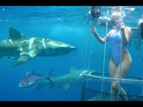 Los 5 Ataques De Tiburón Mas Aterradores A Personas Reales HD 2016 Mundo Misterio Inc