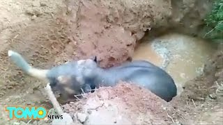 Bayi gajah terjebak di sumur, diselamatkan penduduk desa India - Tomonews