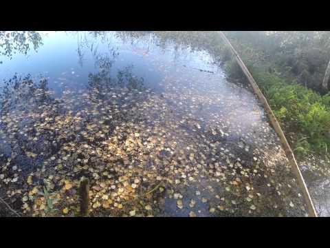 осень рыбалка ротан
