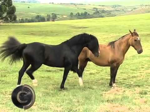 Cabanha Sao Rafael 2011 Programa Cavalos Crioulos Parte 1