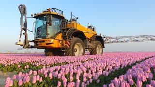 Challenger RoGator RG 645C | Spraying Tulips | Maliepaard Bloembollen