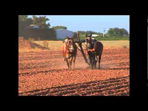 Arado con mula