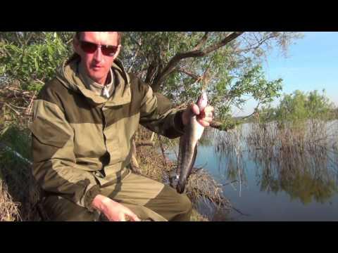 майская рыбалка в ютубе