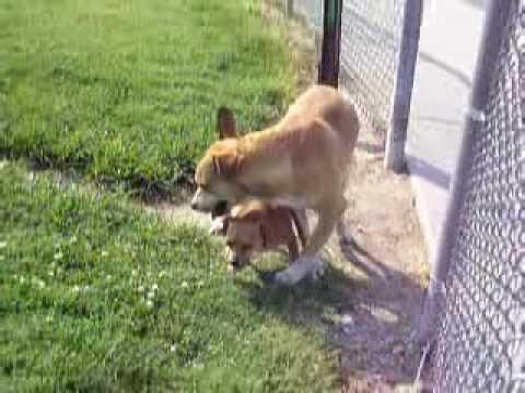 Xxx Mp4 A DOGS LIFE 3gp Sex